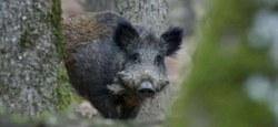 28/04 - Permis, vignette et licence de chasse : Nouveautés