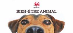 08/01 - Le Code wallon du Bien-être animal a été adopté par le Parlement wallon