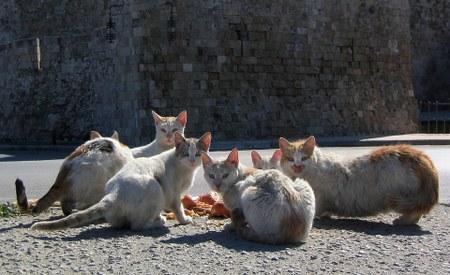 19/10 - Campagne de stérilisation des chats errants du 1er décembre 2016 au 1er octobre 2017