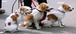 21/04 - Divagation des chiens : La laisse, c'est pas fait pour les chats !
