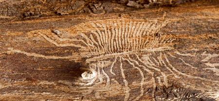 26/10 - Recommandations aux propriétaires forestiers privés concernés par des épicéas scolytés sur leurs parcelles