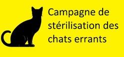 29/01 - Campagne de stérilisation des chats errants du 01 février 2021 au 31 mars 2021 : Informations pratiques