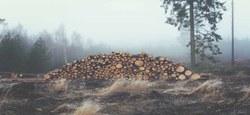 01/07 - Vente de 5 lots de bois de +/- 10 stères...