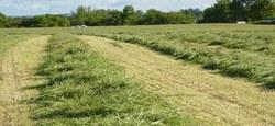 02/05 - Vente d'herbe sur pied 2019 : l'appel aux candidatures est lancé...
