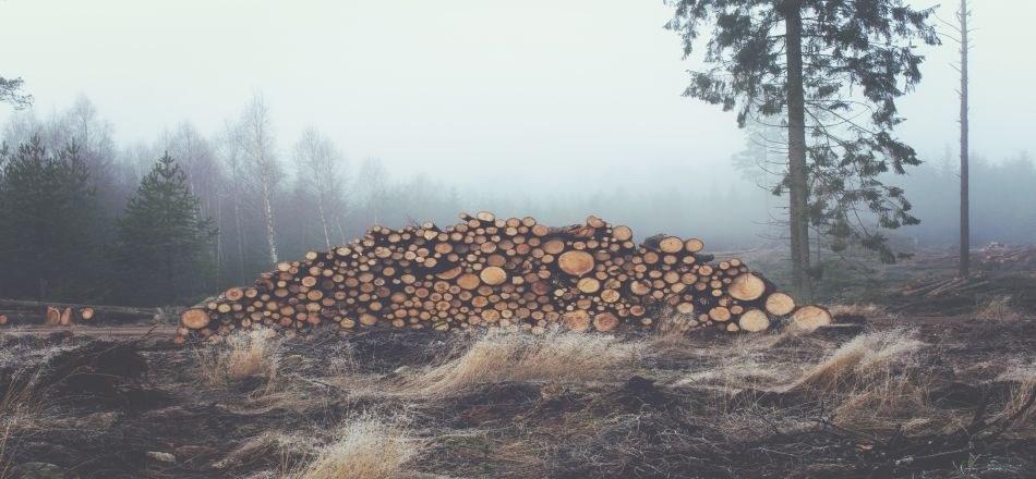 07/01 - Vente de bois de chauffage 2019 : Remise en vente des lots invendus le 14 décembre 2019
