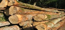 10/08 - Vente au rabais des coupes de bois sur pied : le catalogue 2018 est disponible