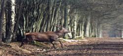 11/10 - Droits de chasse 2018-2027 : Location publique