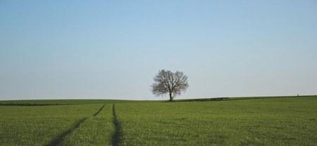 12/07 - Location de terrains agricoles : l'appel aux candidatures et levée des soumissions...