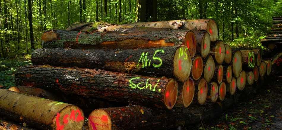 14/01 - Vente par soumission des coupes de bois sur pied de l'exercice 2020 - Lots invendus le 11 septembre 2019 : le catalogue est disponible