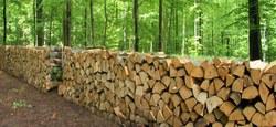 15/06 - Vente de bois de chauffage : 12 lots de 10 stères (remise en vente)