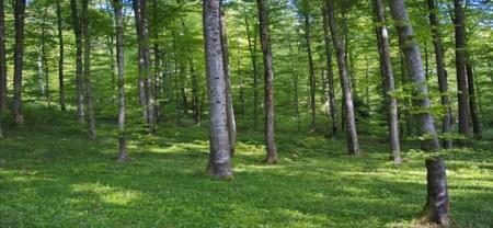 """27/06 - Enquête publique : Projet de Plan d'Aménagement forestier des bois communaux de Doische - UA """"Fagne"""""""