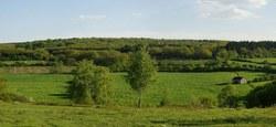 30/01 - Avis d'enquête publique : Projet de Plan d'aménagement forestier de la Calestienne